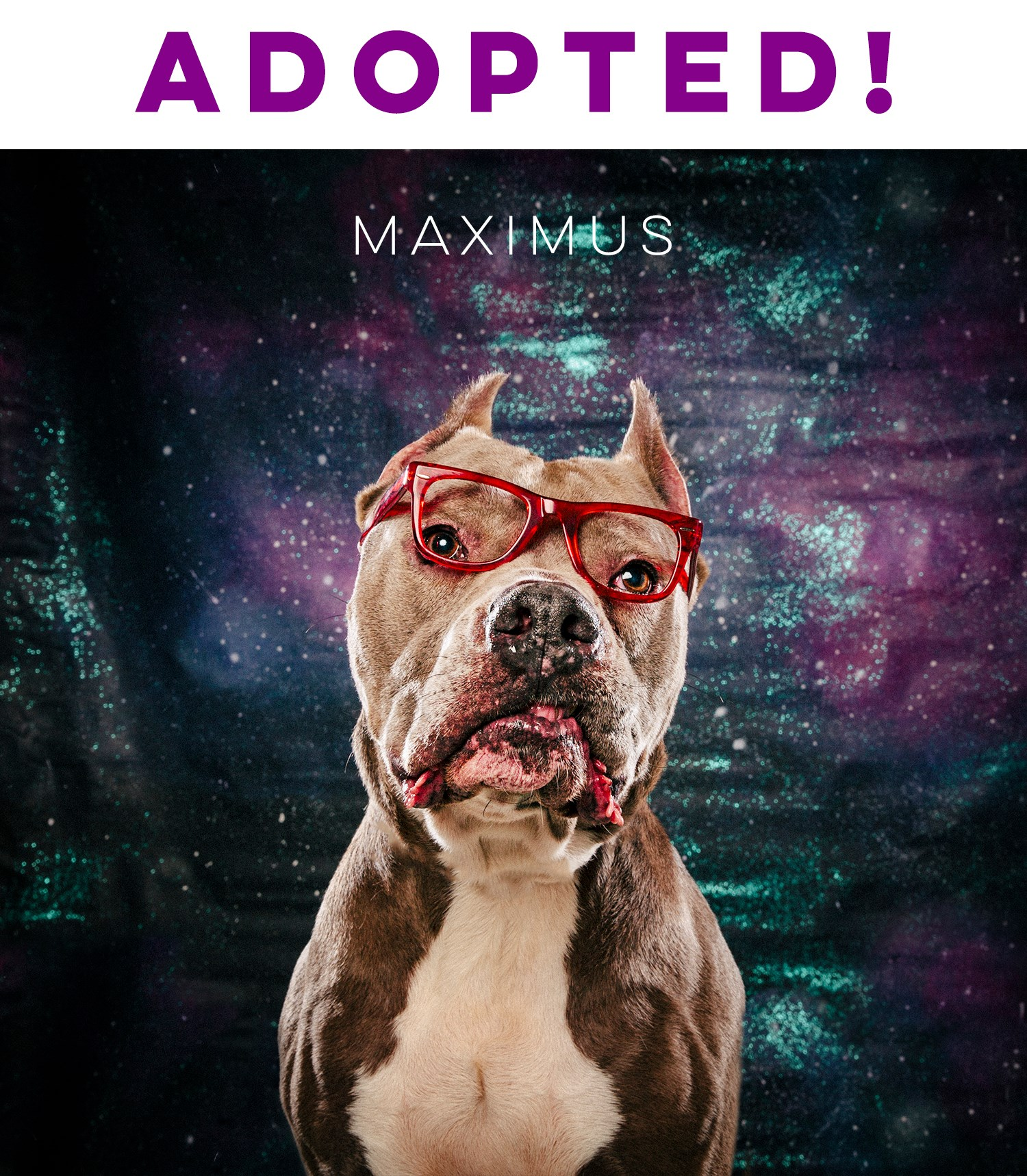 Arouty-Adopted-Maximus-Red-Glasses