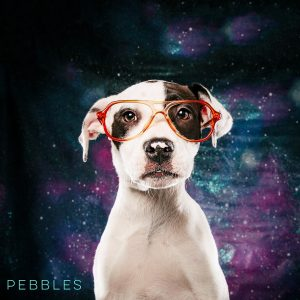 Pebbles with spots in vintage kids glasses. from Jamie's Animal Rescue