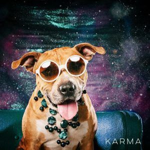 Dog in sunglasses, Karma wearing round glasses.