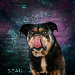 Beautiful Beau is adoptable through Best Friends Furever