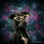 Frankie, black dog wearing cat eye glasses in white (Tang by Victory)