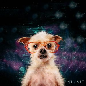 Kids vintage glasses on little dog, Vinnie. Chinese Crested mix
