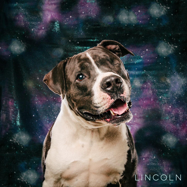 arouty-galaxy-houston-rescue-dog-lincoln