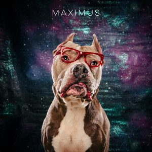 Adopt Maximus, dog in glasses with clipped ears from Pasadena Texas