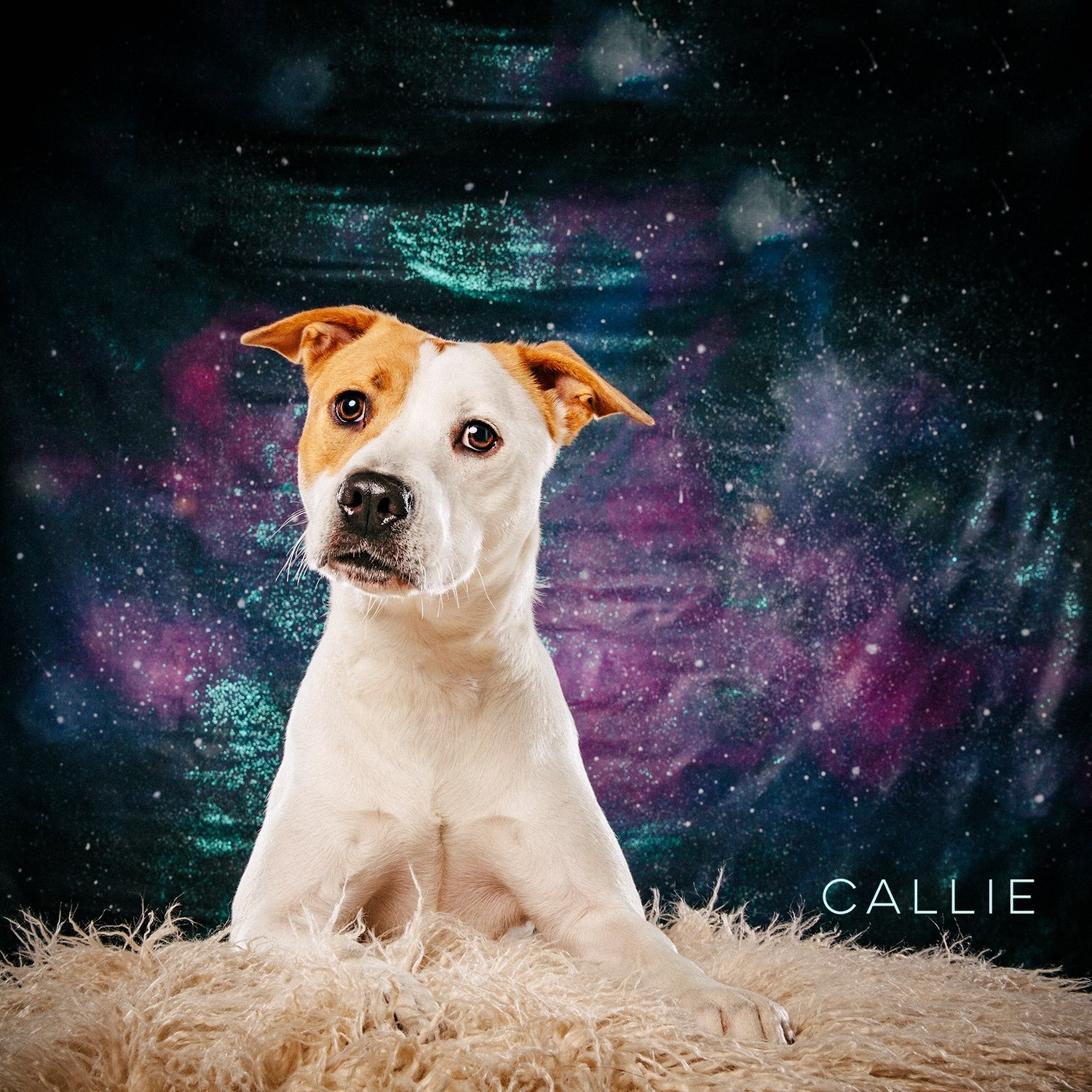 Arouty Galaxy Houston Rescue Olive