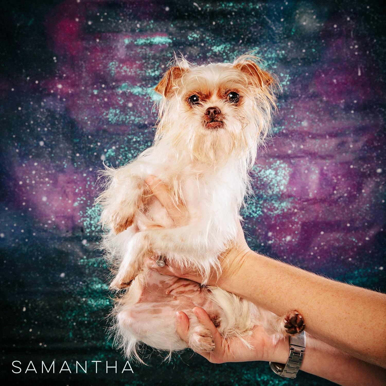 Arouty Galaxy Houston Tiny Small Rescue Dog Samantha