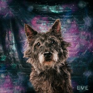 Eve is available for adoption through Westie & Scottie Rescue Houston.