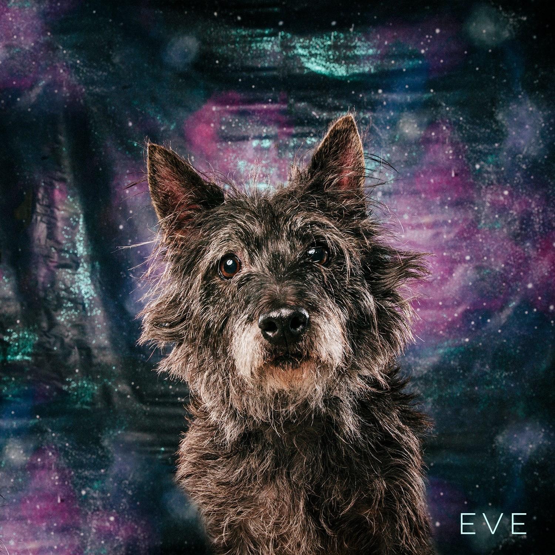 Arouty Galaxy Houston Dog Scottie Eve