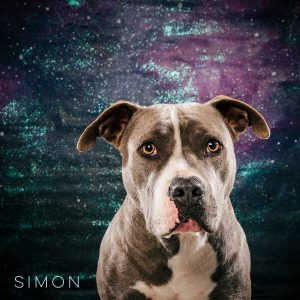 Simon is available for adoption through PUPS Prevent Unwanted Pets.